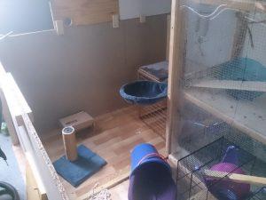 freilaufgehege ratten (Small)