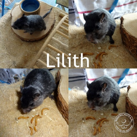 lilith (Small)