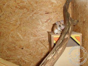Stachelmäuse sind sehr neugierig und beobachten aus sicherer Entfernung gerne was im Gehege passiert.