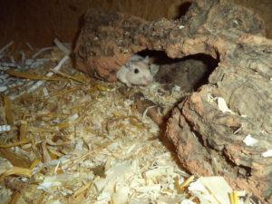 Ratz und Rübe wünschen sich ein eigenes Zuhause!