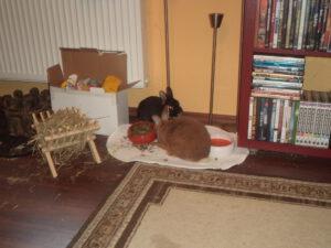 Kaninchenecke im Wohnzimmer