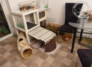 Optimale Haltungsbedingungen für Kaninchen in freier Wohnungshaltung
