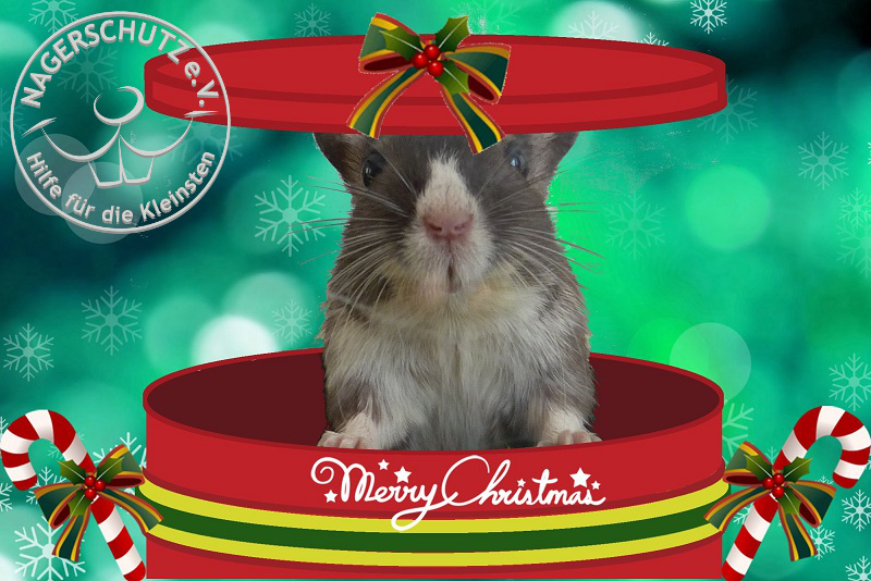 Tiere gehören nicht unter den Weihnachtsbaum.