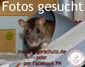 FotosGesucht