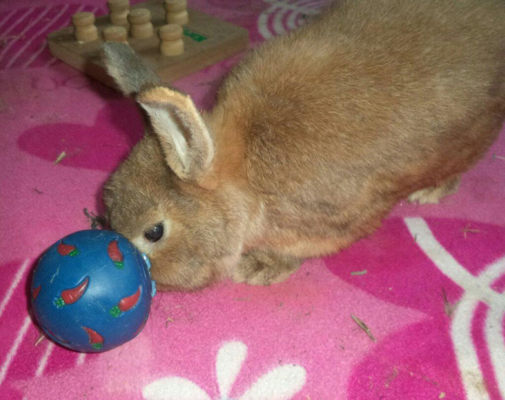 Kaninchen Pauli mit seinem Futterball