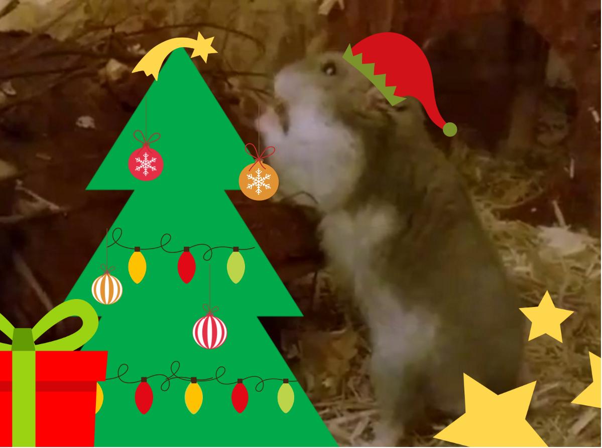 weihnachtspoppy