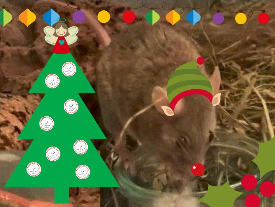 christmas_tete