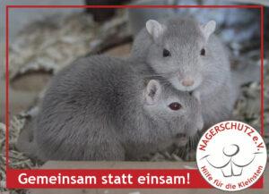 gse_renner