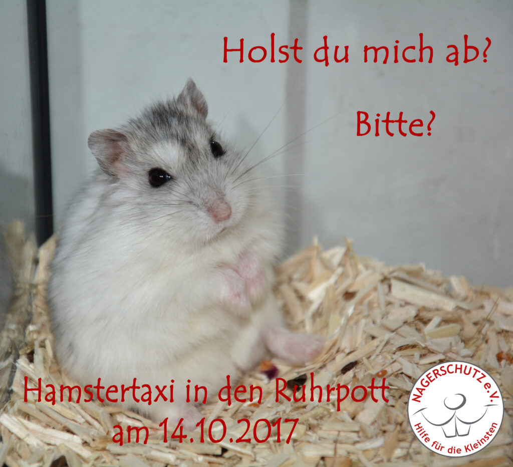 Hamstertaxi (14.10.)