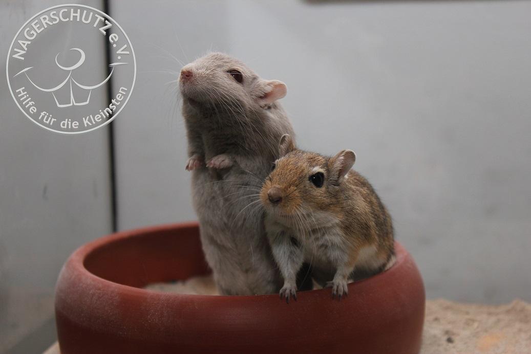 Mika&Nino_ebay