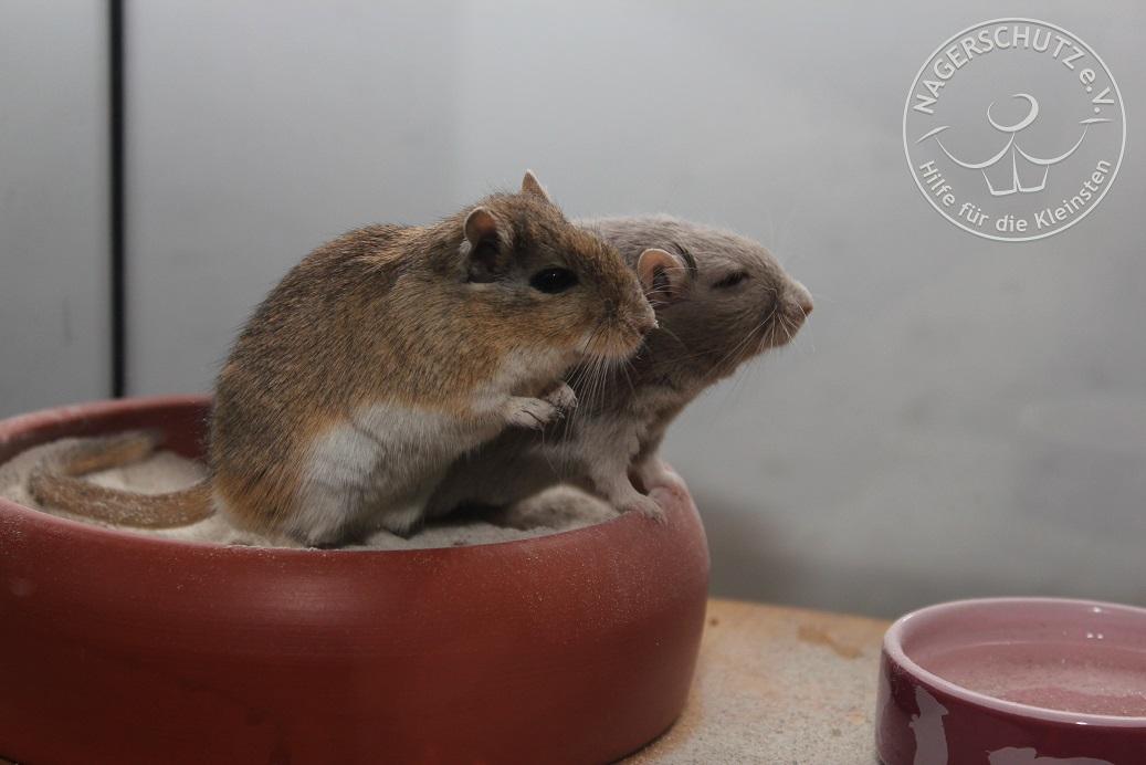 Nino&Mika2_Blog