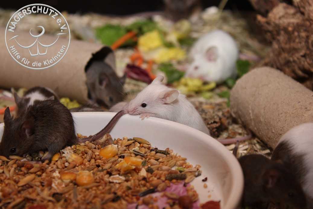 Mäusekind3